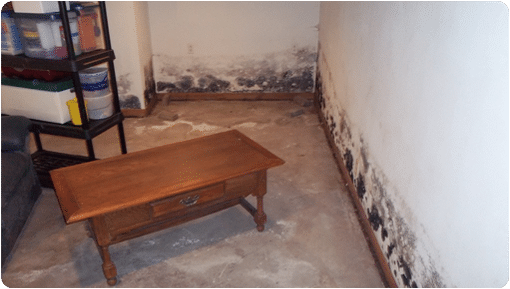 Picture of Mold in a Basement