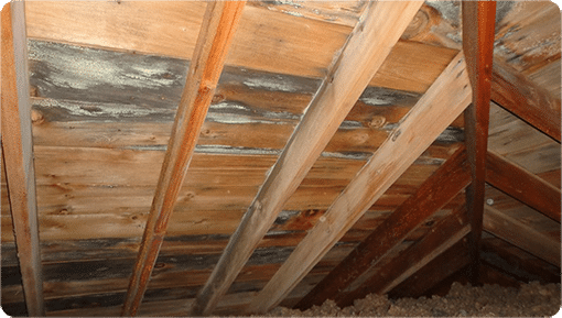 Picture of Mold in the Attic